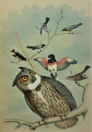 Studer's Birds of North America. Theodore Jasper